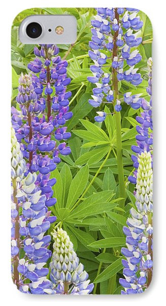 Purple Lupine Flowers IPhone Case by Keith Webber Jr