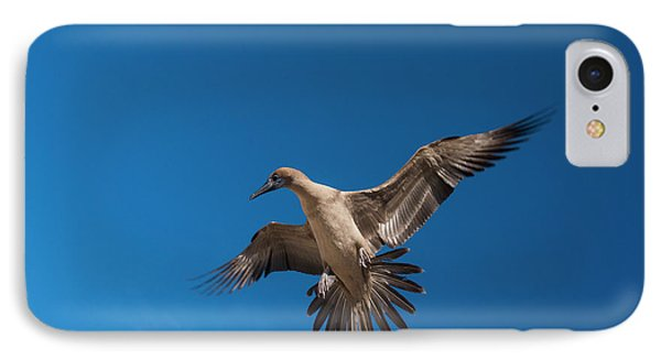 Red-footed Booby (sula Sula Websteri IPhone Case by Pete Oxford