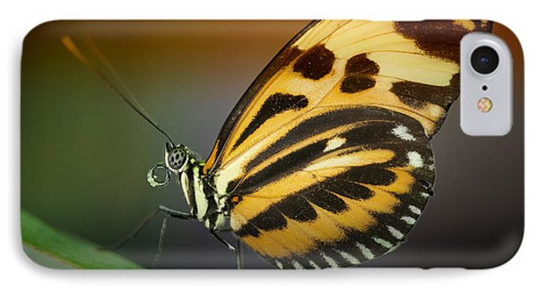 IPhone Case featuring the photograph Resting Butterfly by Zoe Ferrie
