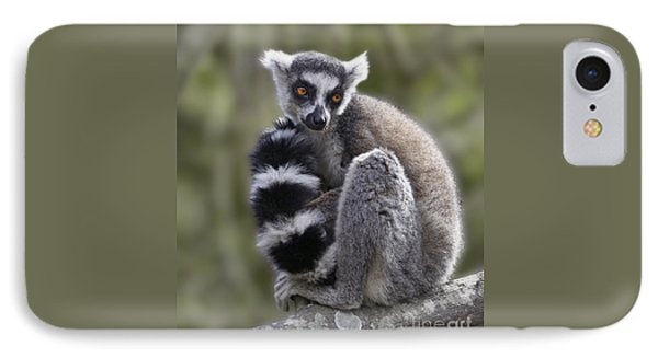 Ring-tailed Lemur IPhone Case by Liz Leyden