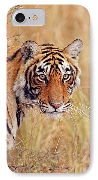 Royal Bengal Tiger Watching IPhone Case