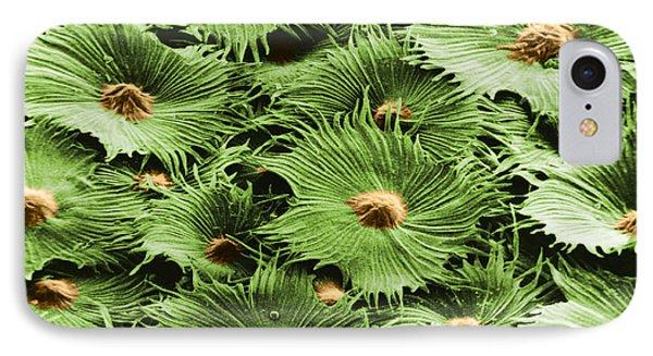 Russian Silverberry Leaf Sem Phone Case by Asa Thoresen