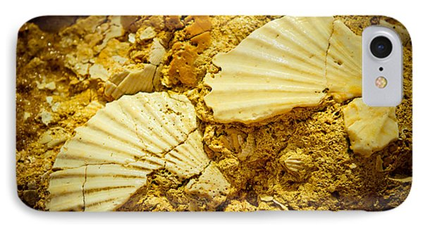 Seashell In Stone Phone Case by Raimond Klavins