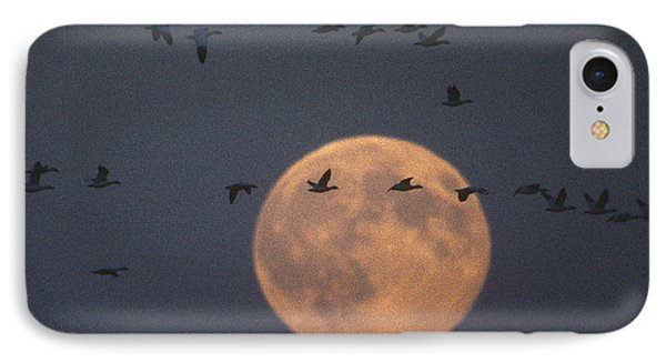 Snow Geese IPhone Case by James L. Amos