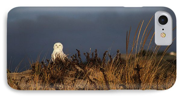 Snowy Owl Hampton Bays New York IPhone Case