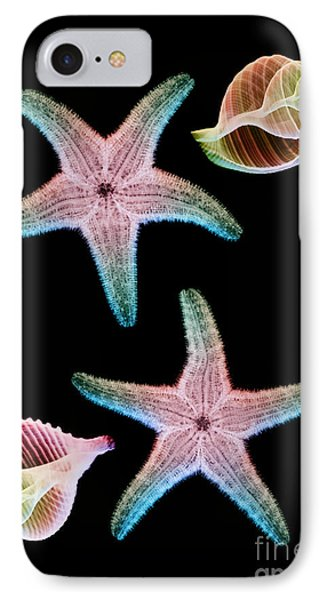 Starfish And Marine Molluscs Phone Case by D Roberts