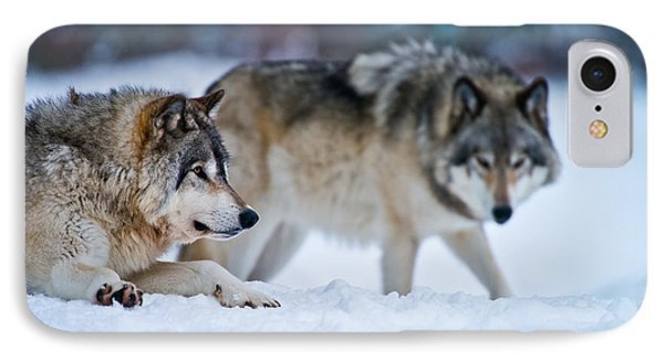 Timber Wolf Picture IPhone Case