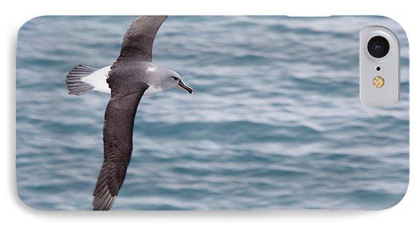 Albatross iPhone 7 Case - Uk Territory, South Georgia Island by Jaynes Gallery