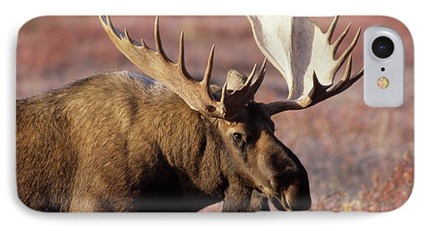 Usa, Alaska, Bull Moose, Denali IPhone Case by Gerry Reynolds