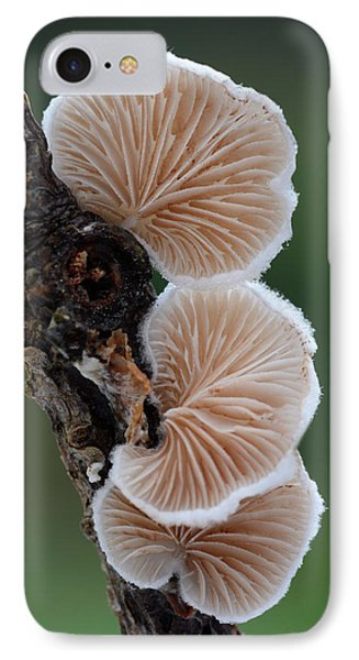 Variable Oysterling Fungus IPhone Case