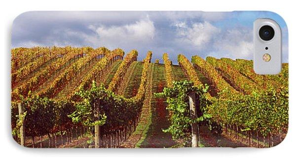 Vineyard At Napa Valley, California, Usa IPhone Case by Panoramic Images