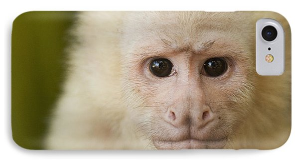 White-faced Capuchin IPhone Case