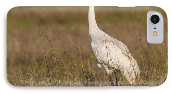 Whooping Crane IPhone Case by Doug Lloyd
