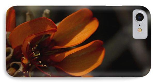 Wiliwili Flowers - Erythrina Sandwicensis - Kahikinui Maui Hawaii Phone Case by Sharon Mau