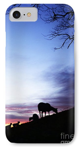 Winter Lambs And Ewes Sunrise Phone Case by Thomas R Fletcher