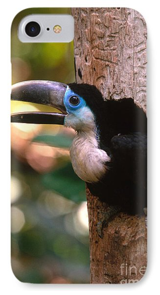 Yellow-ridged Toucan IPhone Case by Art Wolfe