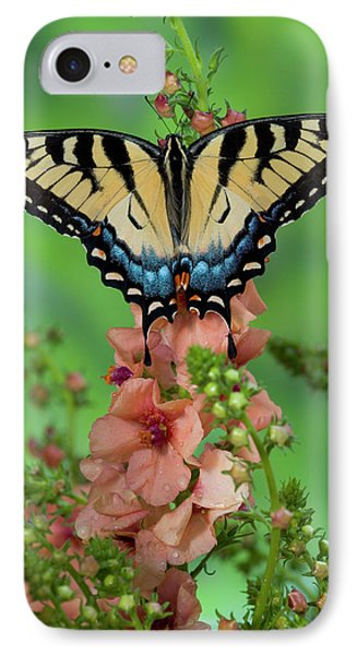 Eastern Tiger Swallowtail Butterfly IPhone Case by Darrell Gulin