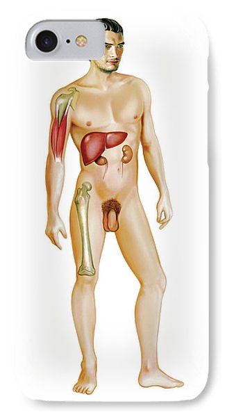 Male Genital System IPhone Case by Asklepios Medical Atlas