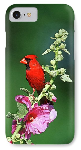 Northern Cardinal (cardinalis Cardinalis IPhone Case