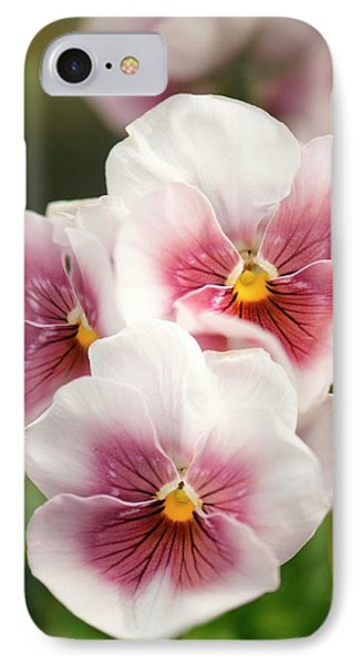 Pansy (viola X Wittrockiana) IPhone Case