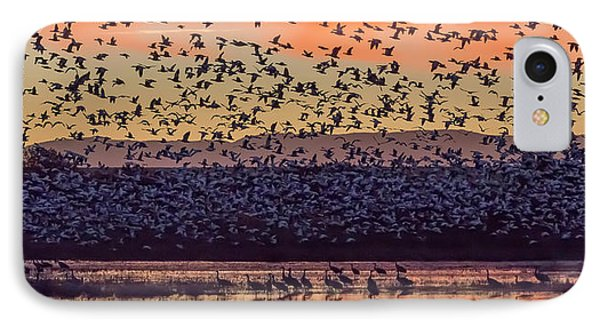 Usa, New Mexico, Bosque Del Apache IPhone Case by Jaynes Gallery