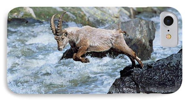 Alpine Ibex (capra Ibex IPhone Case