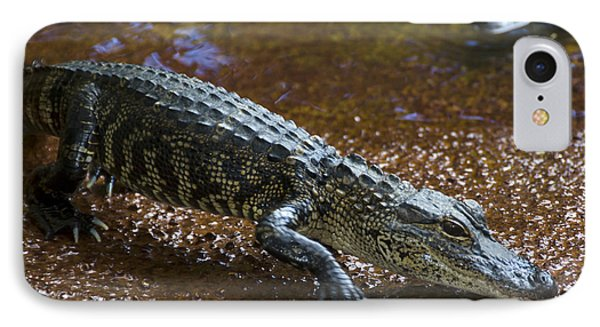 American Alligator IPhone 7 Case by Mark Newman