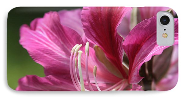 Bauhinia Blakeana - Hong Kong Orchid - Hawaiian Orchid Tree  IPhone Case