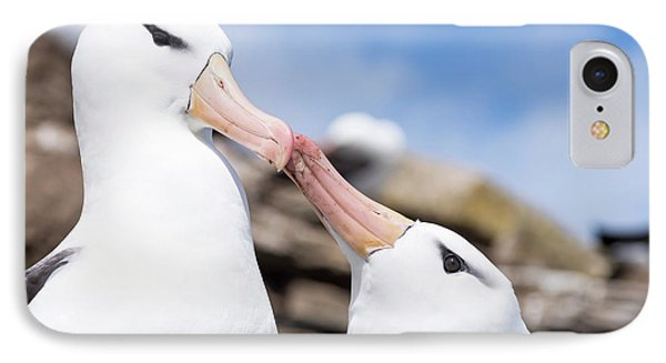 Albatross iPhone 7 Case - Black-browed Albatross (thalassarche by Martin Zwick