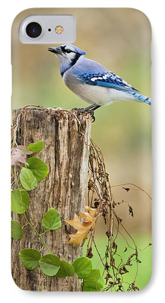 Blue Jay (cyanocitta Cristata IPhone Case