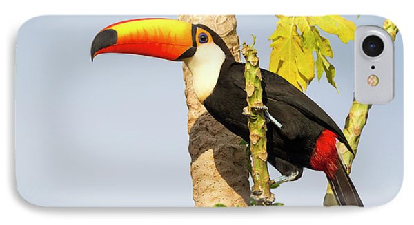Brazil, Mato Grosso, The Pantanal, Toco IPhone 7 Case