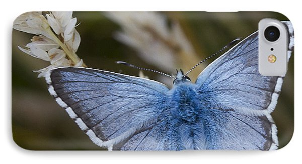 Common Blue Butterfly IPhone Case by Shirley Mitchell