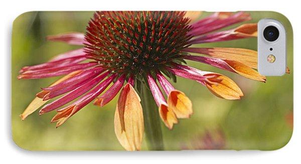Cornflower IPhone Case