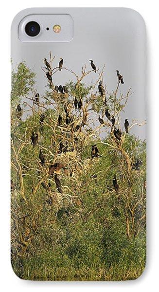 Eurasian Cormorant (phalacrocorax Carbo IPhone Case by Martin Zwick