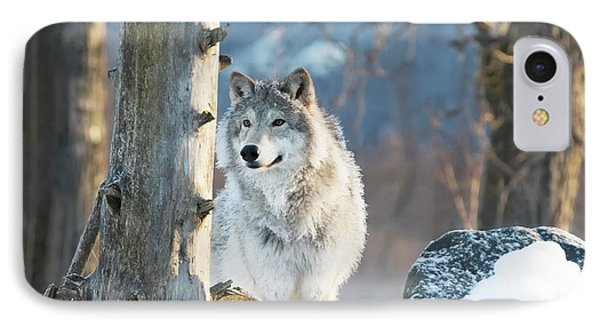 Female Gray Wolf  Canis Lupus IPhone Case by Doug Lindstrand