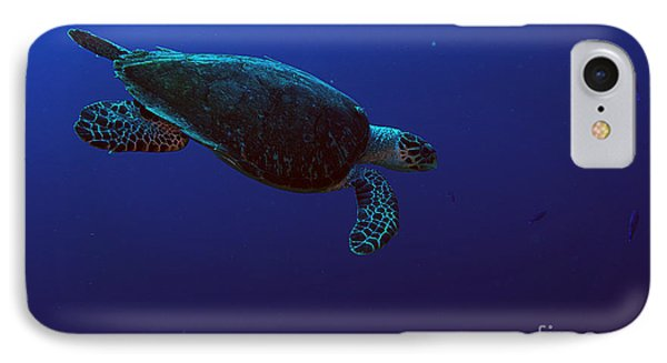 Hawksbill Turtle IPhone Case by JT Lewis