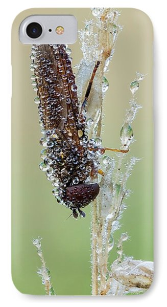 Hoverfly IPhone Case by Heath Mcdonald