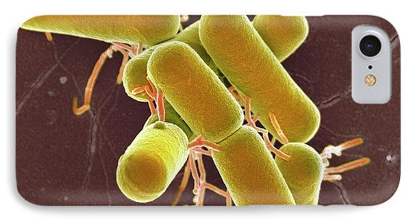 Lactobacillus Bacteria IPhone Case by Science Photo Library