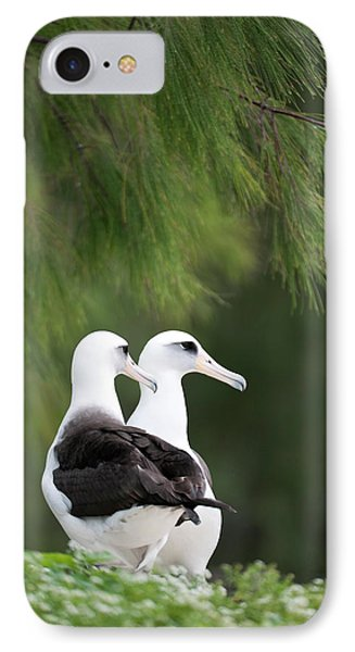Laysan Albatross (phoebastria IPhone Case by Daisy Gilardini