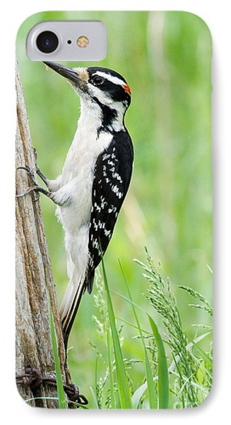 Male Hairy Woodpecker IPhone Case by Linda Freshwaters Arndt