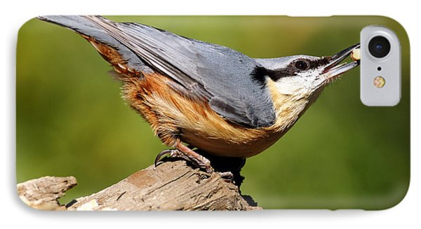 Nuthatch IPhone Case by Grant Glendinning