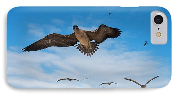 Red-footed Booby (sula Sula Websteri IPhone 7 Case