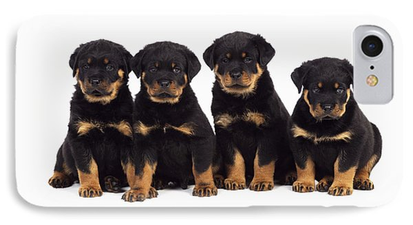 Rottweiler Puppy Dogs IPhone Case by John Daniels