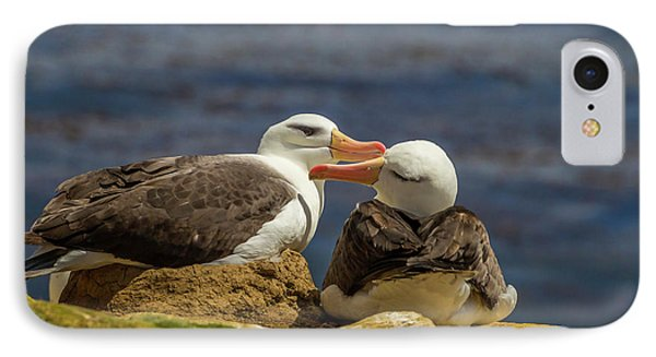 Albatross iPhone 7 Case - South America, Falkland Islands by Jaynes Gallery