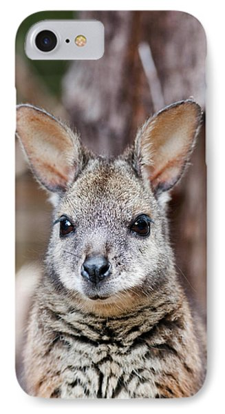 Tammar Wallaby (macropus Eugenii IPhone Case by Martin Zwick