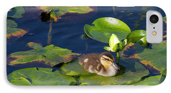Wa, Juanita Bay Wetland, Mallard Duck IPhone Case by Jamie and Judy Wild
