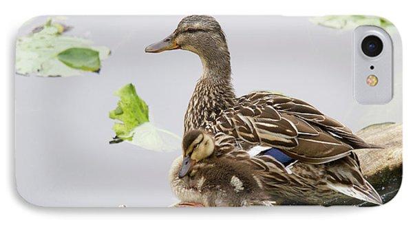 Wa, Juanita Bay Wetland, Mallard Female IPhone Case by Jamie and Judy Wild