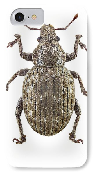 Weevil IPhone Case by F. Martinez Clavel