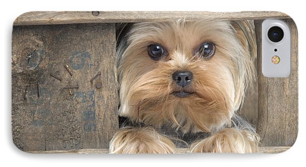 Yorkshire Terrier Dog IPhone Case by Jean-Michel Labat