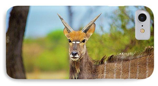 African Mammals IPhone Case